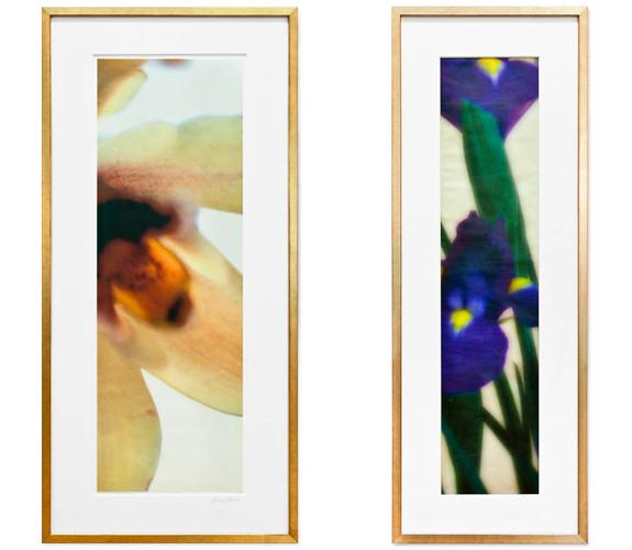 Daffodile and Iris Single Panels Framed  L36