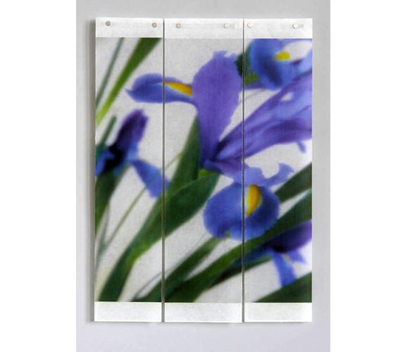 Iris II   44x29