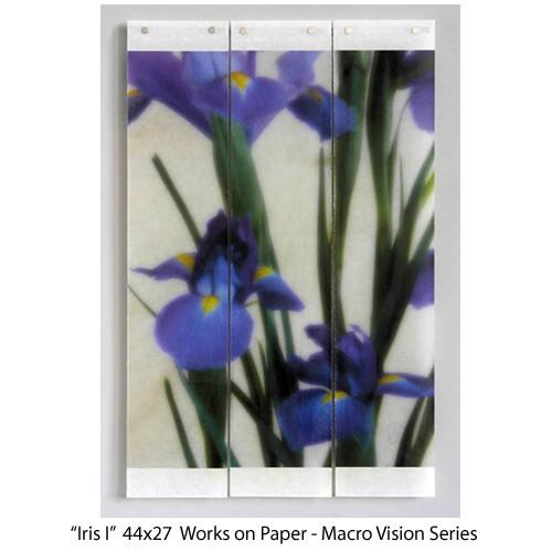 Iris I   44x27